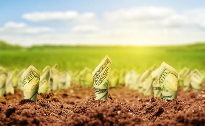 Rolled up dollar bills planted in rich soil